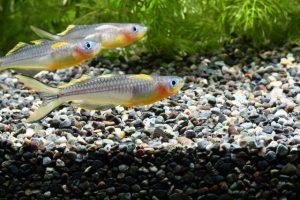 熱帯魚が群泳しやすくなる環境を作る方法の画像