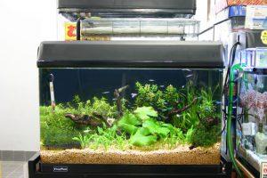 熱帯魚の成長にも影響する?照明の選び方の画像