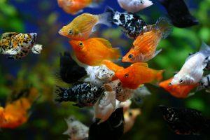 熱帯魚を繁殖させたい方必見!繁殖しやすい環境の作り方の画像