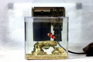 海水熱帯魚 飼いやすさランキングトップ5!の画像