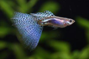熱帯魚初心者におススメの水槽4つの画像
