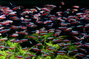 まるで芸術!群泳する熱帯魚の種類とその魅力の画像