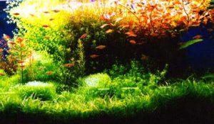 熱帯魚は飼育が難しい・・?飼いやすい熱帯魚4選!の画像