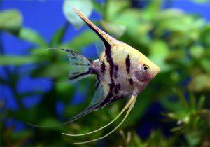 これさえあれば大丈夫!熱帯魚を飼い始める際の三種の神器の画像