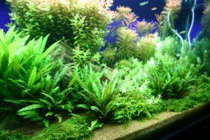 しっかり照明時間を確保しましょう。熱帯魚の照明時間は平均6~10時間の画像