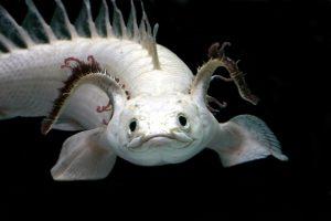 古代魚は何億年も前から存在している魚の画像