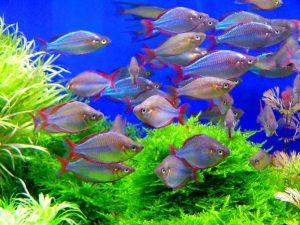難易度別で、人気の熱帯魚をご紹介の画像