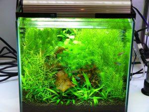 はじめての熱帯魚飼育は飼育セットがおススメ!の画像