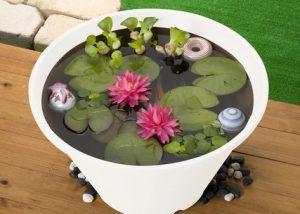 熱帯魚を屋外飼育するために必要な設備と注意点の画像