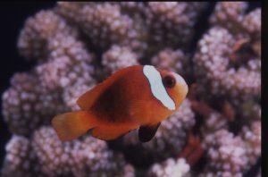 種類に合わせて適温に設定を!熱帯魚を飼う水温の画像