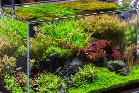 水槽 水草