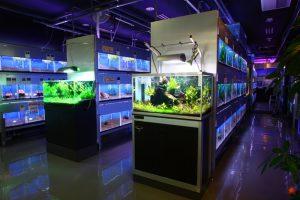 熱帯魚を飼う時はここに注目!熱帯魚の選び方とは!の画像