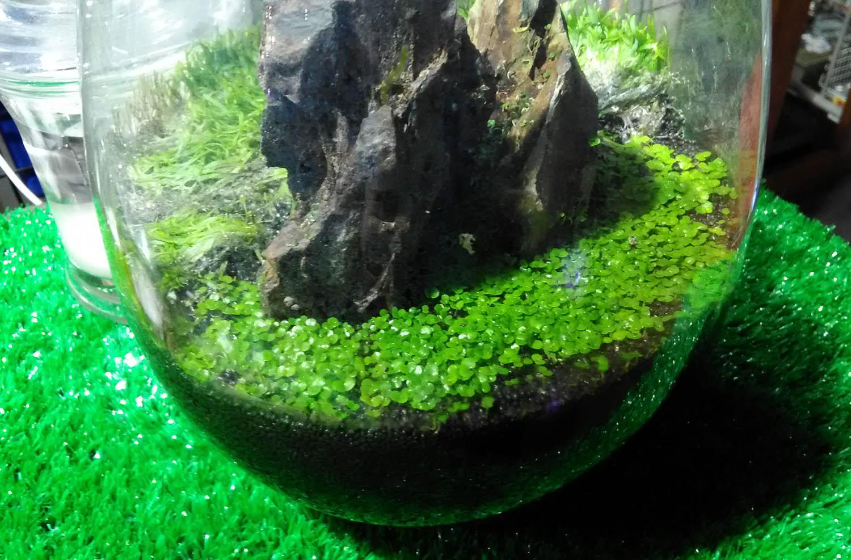 育てる 水草