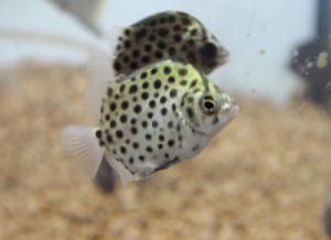 リサーチしていて気が付いた!「あれ!?」な名前のお魚3選の画像