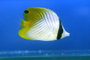 海水魚向け!新しいタイプの「液体フード」のご紹介の画像